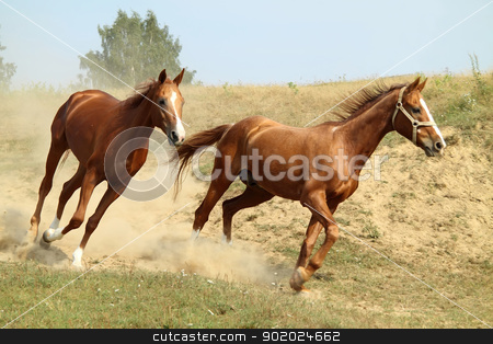 _Two red horses_ stock photo, Two red horses on the meadow by Yulia Chupina