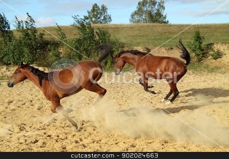 _Young horses_ stock photo, Two young horses run and jump. by Yulia Chupina