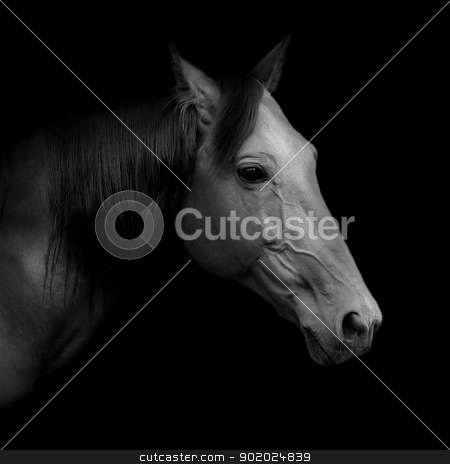 Russian trotter stock photo, Beautiful Russian trotter named Rur - prize winner of the St. Petersburg International Horse Exhibition