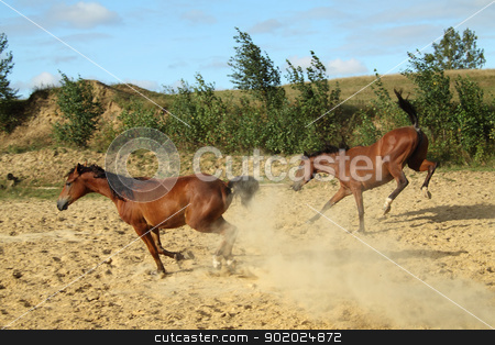 Young horses stock photo, Two young horses run and jump. by Yulia Chupina