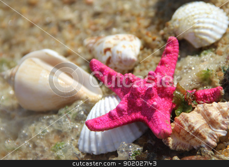 Pink starfish and shells on the beach stock photo, Sea time composition: pink starfish on the beach by Tatiana Mihaliova