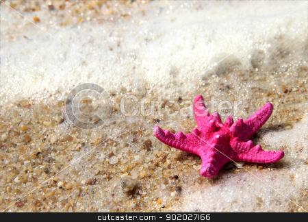 Pink starfish on the beach stock photo, Sea time composition: pink starfish on the beach by Tatiana Mihaliova