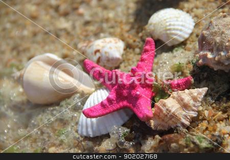 Shells and fishstar taken away ashore stock photo, Shells and starfish taken away ashore by Tatiana Mihaliova