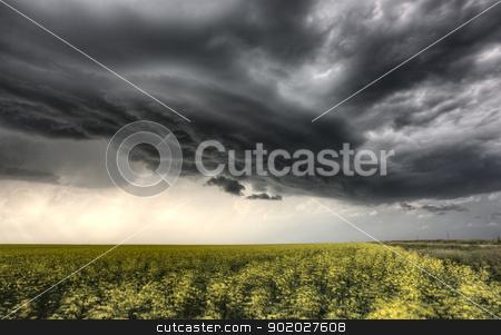 Storm Clouds Saskatchewan stock photo, Storm Clouds Saskatchewan yellow bright canola field by Mark Duffy