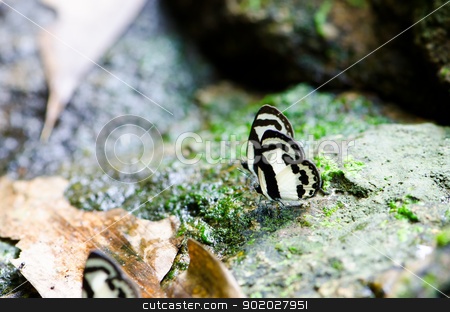 butterfly  stock photo, butterfly in tropical rain forest. by chatchai