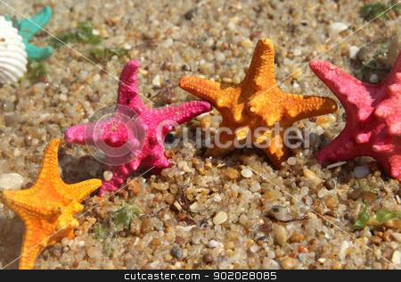 Funny starfishes on the beach  stock photo, Sea time composition: funny starfishes on the beach   by Tatiana Mihaliova