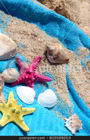 Sea composition of starfishes and shells  stock photo, Sea composition of starfishes, shells and blue towel by Tatiana Mihaliova