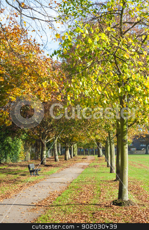 Park in Autumn stock photo, Footpath in a park lined up with trees with orange and yellow leaves in autumn. Recreation Park in Colchester, England. by Brigida Soriano