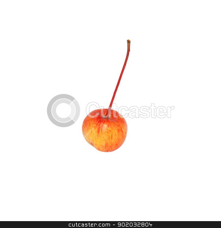 Single crab apple stock photo, Single crab apple, isolated on a white background by Sarah Marchant