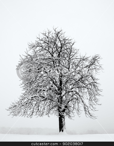Alone tree in the snow stock photo, Alone tree in the snow by vician