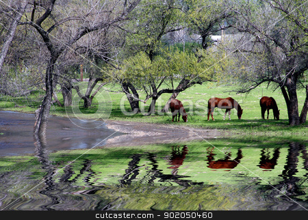 Horses And Trees Reflection. A nature scenic of horses grazing near a reflective riverbed. stock photo, Horses And Trees Reflection. A nature scenic of horses grazing near a reflective riverbed. by green love