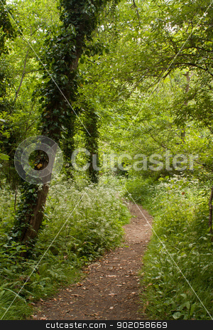 Footpath between trees in summer stock photo, Footpath between trees in summer by Brigida Soriano