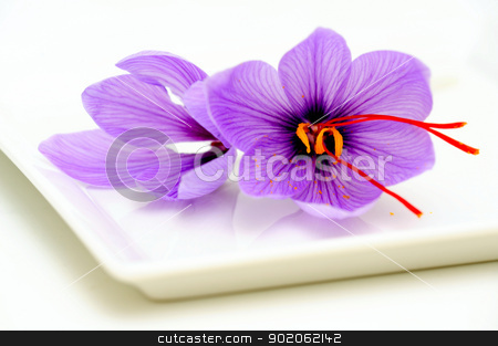 Saffron Flower Closeup stock photo, Fresh Saffron flowers known also as Crocus sativus used as a spice for flavoring and coloring food especially rice. by Lynn Bendickson