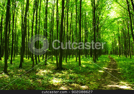 green forest stock photo, a path is in the green forest by Vitaliy Pakhnyushchyy