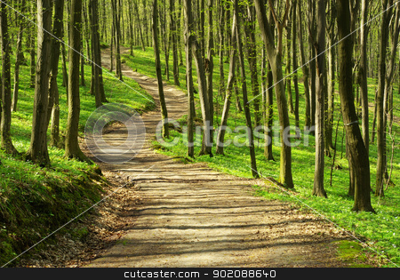 path stock photo, path is in the green forest by Vitaliy Pakhnyushchyy