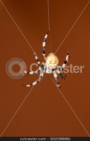 spider  stock photo, spider on a red background by Vitaliy Pakhnyushchyy