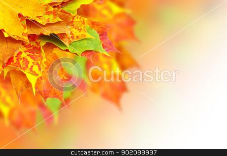 autumn leaves  stock photo, autumn leaves  by Vitaliy Pakhnyushchyy