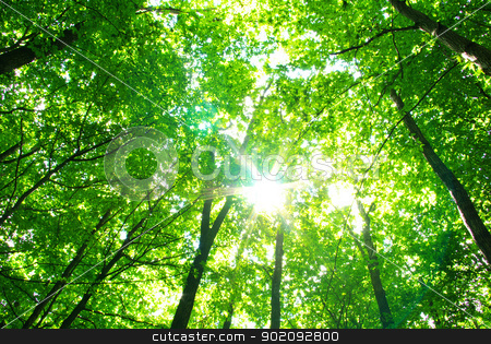 forest stock photo, Early morning sun in the forest by Vitaliy Pakhnyushchyy
