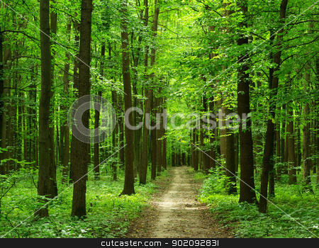 forest stock photo,  path is in the green forest by Vitaliy Pakhnyushchyy