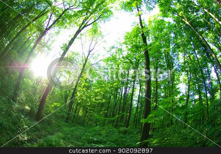 green forest  stock photo, green forest background in sunny day by Vitaliy Pakhnyushchyy