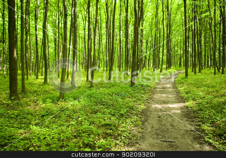 forest way stock photo, a path is in the green forest by Vitaliy Pakhnyushchyy