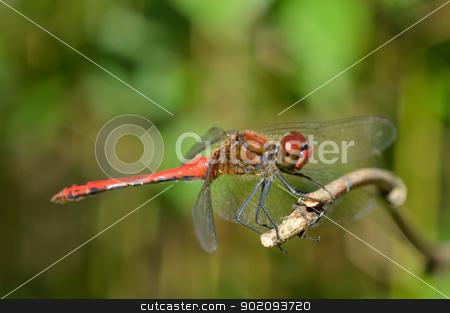 Bright dragonfly sitting on a branch stock photo, Bright dragonfly sitting on a branch, close-up by Nikolay