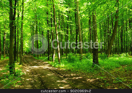 green forest stock photo, path is in the green forest by Vitaliy Pakhnyushchyy