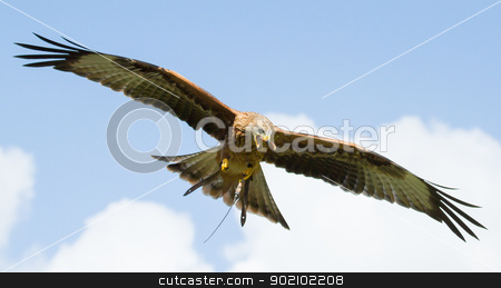 A long-legged buzzard stock photo, A close-up of a long-legged buzzard by michaklootwijk