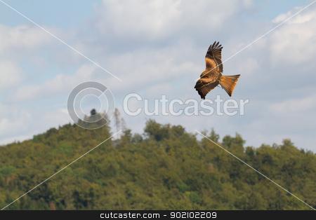 A long-legged buzzard stock photo, A long-legged buzzard in the sky by michaklootwijk