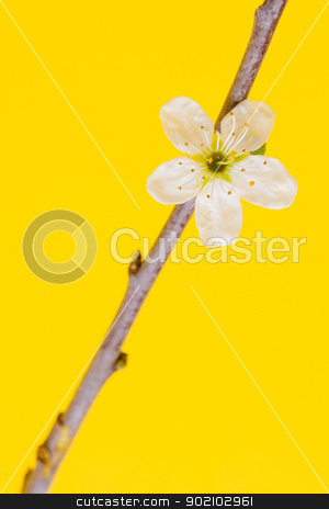 Flower in a tree stock photo, Flower in a tree on a yellow background (spring) by michaklootwijk