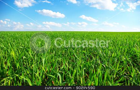 green field stock photo, field on a background of the blue sky by Vitaliy Pakhnyushchyy