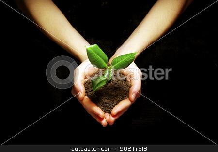 hands holding sapling  stock photo, Hands holding sapling in soil on black by Vitaliy Pakhnyushchyy