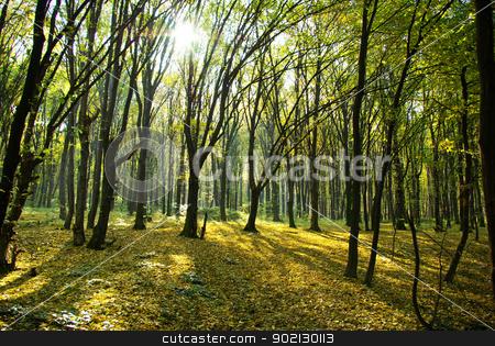 autumn forest stock photo, Autumn forest with the cut through rays of a sun by Vitaliy Pakhnyushchyy