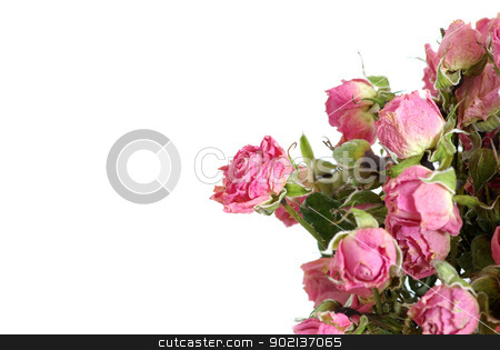 roses stock photo, Close-up shot of a red roses by Vitaliy Pakhnyushchyy