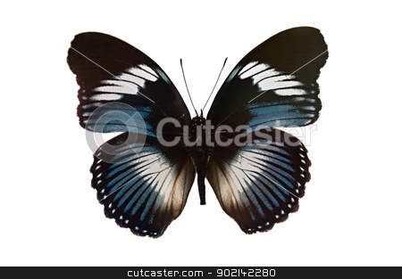 Butterfly isolated on white background  stock photo, Butterfly isolated on white background main color black and white by Ulrich Schade
