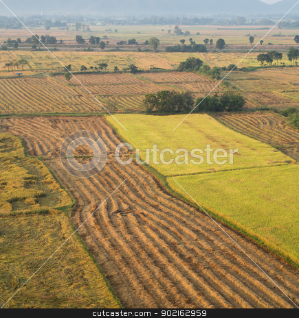 Fields stock photo, Planting rice in the rice fields by narathorn