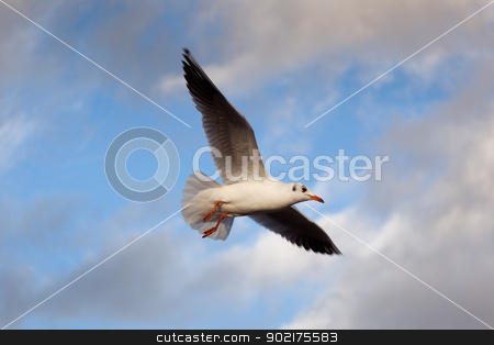 Seagull on fly, Paris, France stock photo, Seagull on fly, Paris, France by B.F.