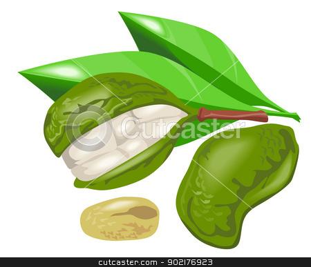 Kola Nut Fruit Retro stock vector clipart, Illustration of kola nut fruit done in retro style. by patrimonio