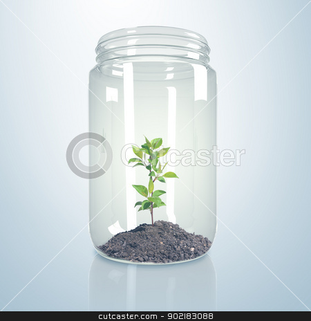 Green sprout inside glass jar stock photo, Green sprout and soil inside a glass jar by Sergey Nivens
