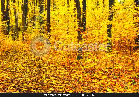 autumn forest   stock photo, autumn forest  background in a sunny day by Vitaliy Pakhnyushchyy