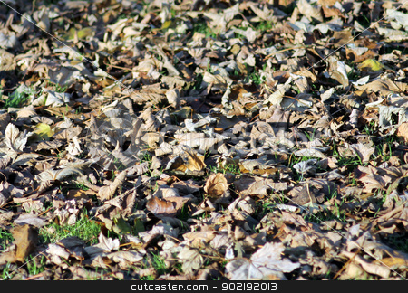 Autumn leaves on green grass stock photo, Fallen autumn leaves scattered on green grass. by Martin Crowdy