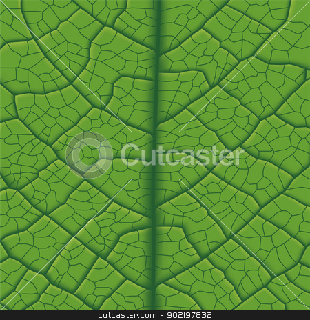 Leaf Vein stock vector clipart, Layered Vector Illustration Of Green Leaf Vein. by Liu Yin