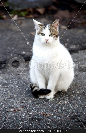 A Cat stock photo, White cat sitting still on the road by Fabio Alcini