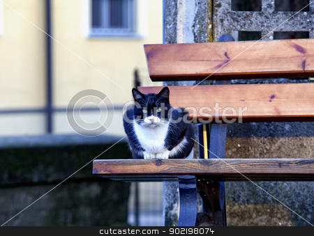 A Cat stock photo, Dangerous cat with menacing look sitting on a bench by Fabio Alcini