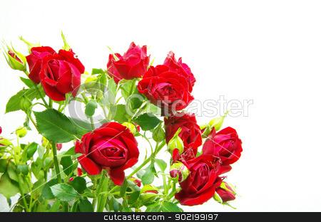 roses stock photo, Close-up shot of a red roses by Vitaliy Pakhnyushchyy