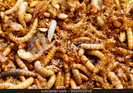 mealworms stock photo, many ugly worms as background by Nneirda