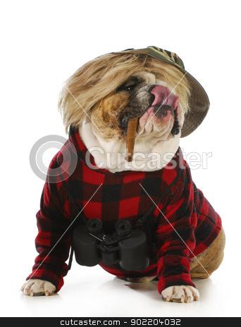 hunting dog stock photo, hunting dog - english bulldog smoking cigar and wearing binoculars and hunting sweater isolated on white background by John McAllister