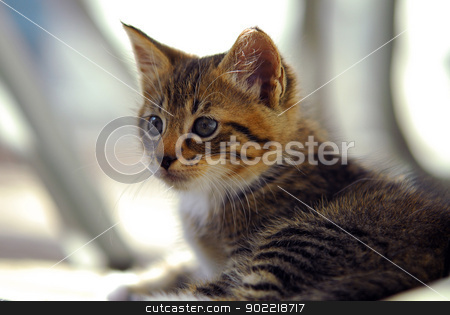 Curious striped  kitten stock photo, cute and Curious striped  kitten by digidreamgrafix.com