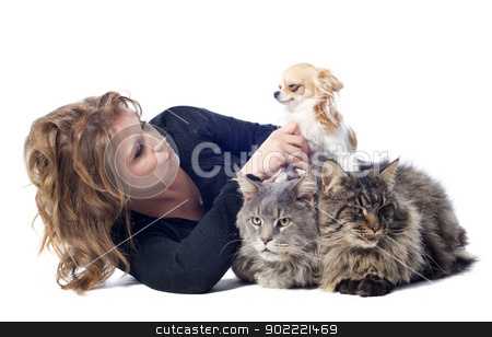 woman and pet stock photo, portrait of a purebred  maine coon cats , chihuahua and woman on a white background by Bonzami Emmanuelle