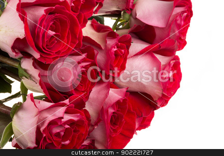 pink roses isolated on white stock photo, pink roses isolated on white by Andrey Starostin